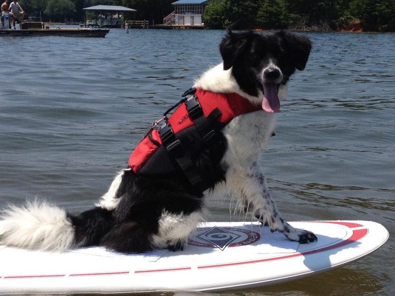 Melissa's Dog Paddle Boarding