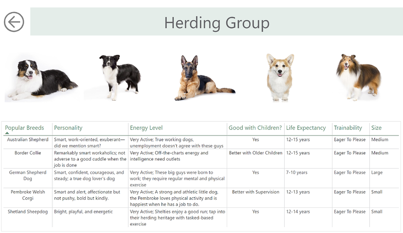 herding group